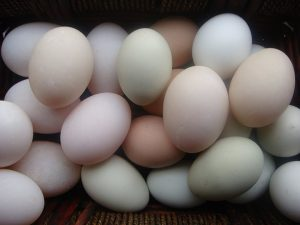 eggs healthy breakfast food packed with protein
